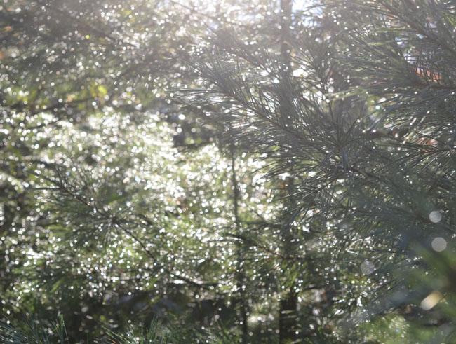 Evergreenblg