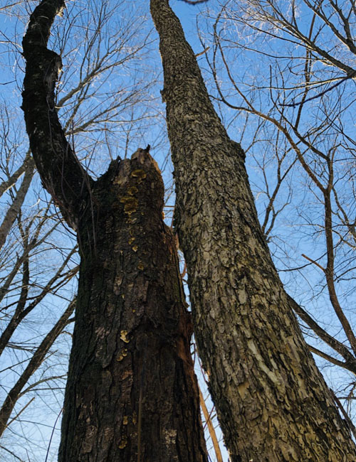 Treefriends