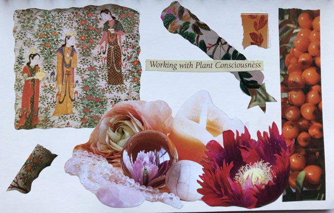 Plantconsciousness