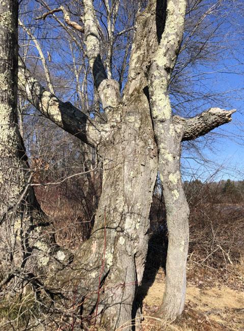 Threetreesfront