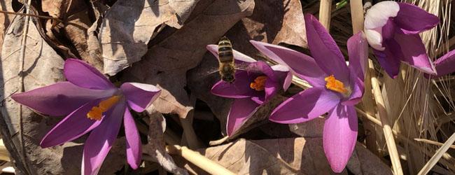 Beesledblg