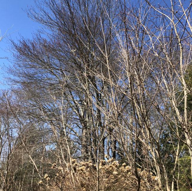 Treesnorth32620