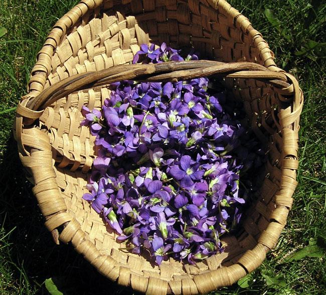 Violetsinfieldbasket
