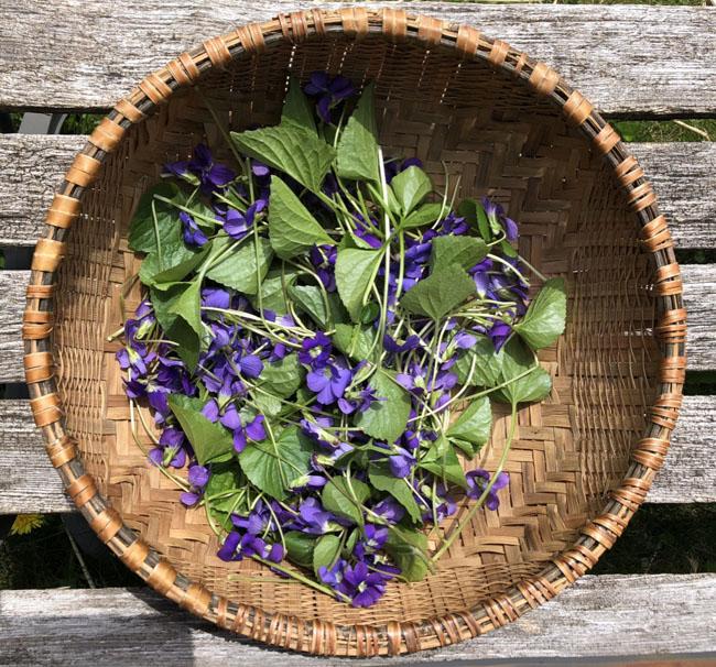 Violetbasket