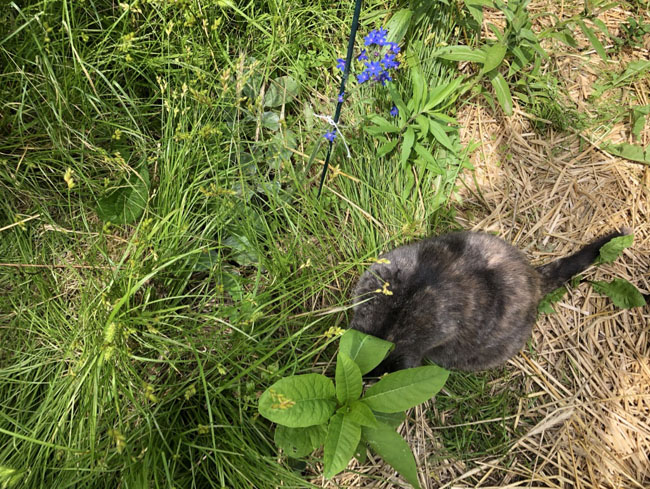 Wanderinglikecats