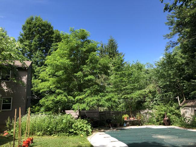 Backyardscope62620