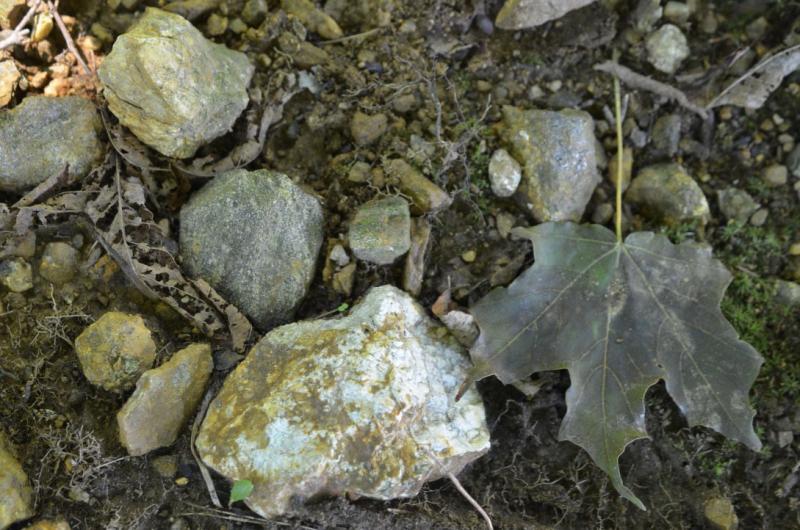 Rocksbyroots90720