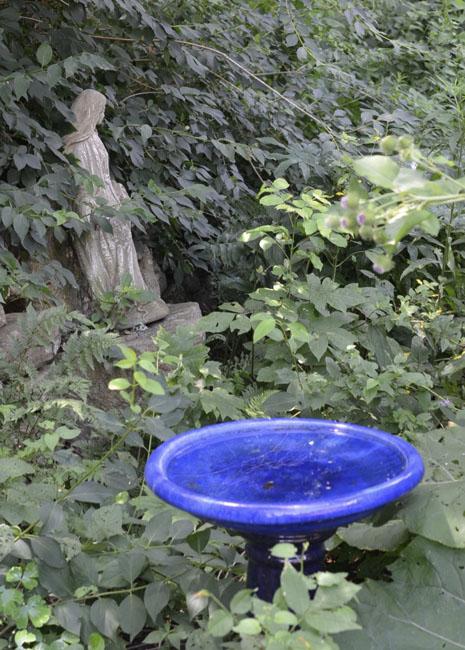 Bluebirdbath