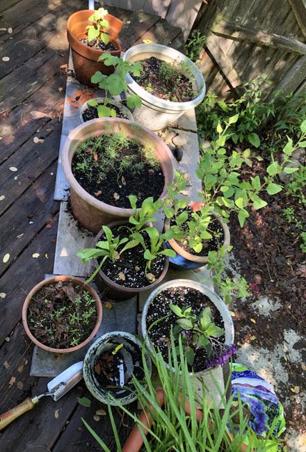 Herbsandflowers70220