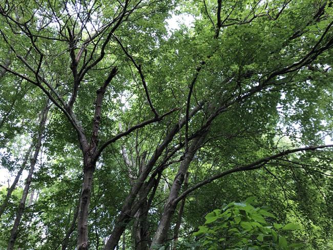 Treesneedtending71320