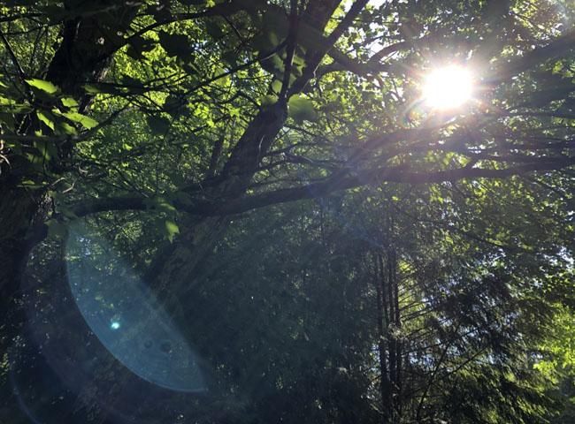 Sunlightafterrain702020