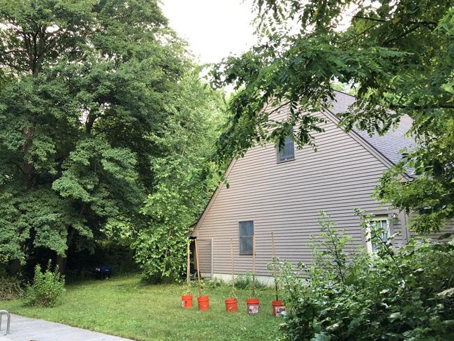 Backdooryard71320