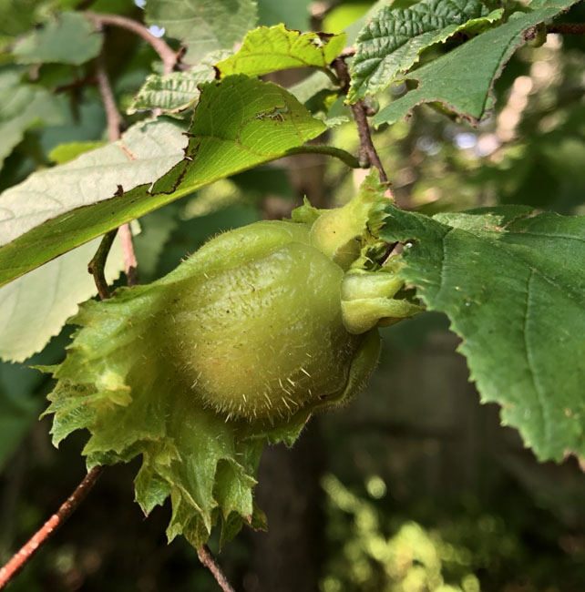 Ripeningtreefruit82520