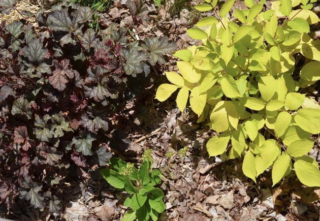 Gardencontrasts60221