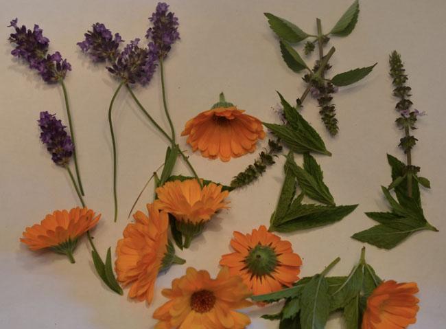 Delicateflowerstuff