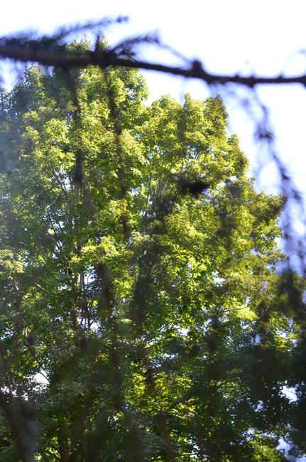 Treehaze90720