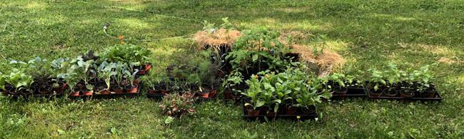 Seedlingsonlawn52321