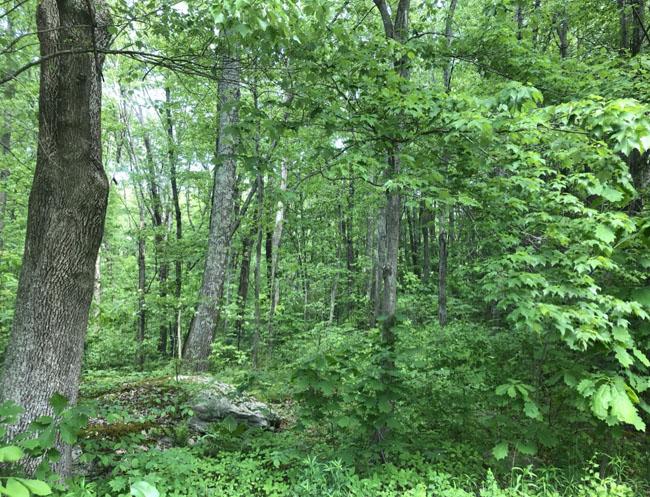 Woodsnorth52721